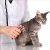 Ветеринарные клиники в Сергаче